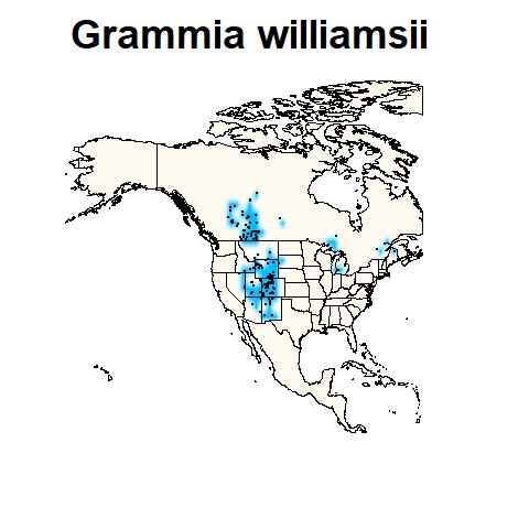 Grammia williamsii