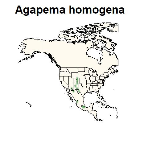 Agapema homogena
